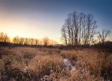 Rasenfläche im Winter Stockbilder
