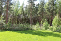 Rasenfläche mit einem Waldhintergrund stockbild
