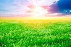 Rasenfläche mit Sonnenuntergang und drastischem Himmel des Sonnenaufgangs Stockfoto