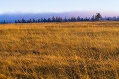 Rasenfläche mit Wald Stockfotos