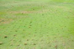 Rasenflächereparatur Stockfotografie