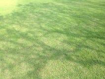 Rasengrün haben Schattenbaum sind Muster Stockfotografie