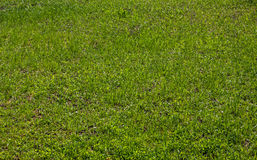 Rasenhintergrund des grünen Grases Lizenzfreies Stockbild
