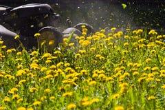 Rasenmähen Stockbild