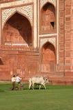 Rasenmähmaschinen beim Taj Mahal Stockfotos