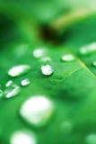 Rasgón en hierba verde fotos de archivo