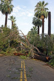 Rasgones de la tormenta del verano a través de Phoenix Fotos de archivo