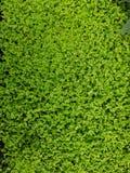 rasgones y chisme, jardín decorativo de la planta, fondo texturizado Foto de archivo