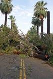 Rasgos da tempestade do verão através de Phoenix Fotos de Stock