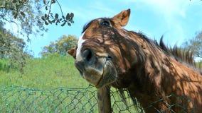 Rasguño del caballo Imagenes de archivo