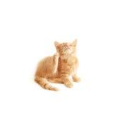 Rasguño del gatito imagenes de archivo
