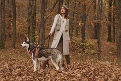 Rashundbegrepp Skrovlig hund - bästa vän r E angus arkivbild