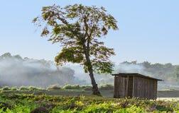 Rasikbill秀丽在Buxa森林的 免版税库存照片