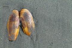 Rasoir Clam Shell dans le sable à la plage photographie stock libre de droits