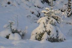 Raspa de arenque en la nieve Fotografía de archivo libre de regalías
