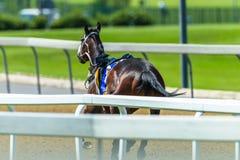 Raspaard Geen Jockey Runaway Track royalty-vrije stock foto's