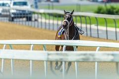 Raspaard Geen Jockey Runaway Track royalty-vrije stock afbeelding