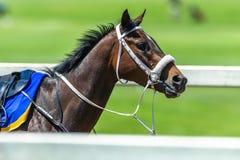 Raspaard Geen Jockey Track royalty-vrije stock foto's