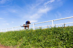 Raspaard Opleidingslandschap Stock Afbeeldingen