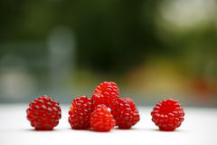 Raspberries. Fresh wild raspberries from the garden Royalty Free Stock Photos