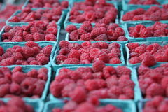 Raspberries. At farmer's market Royalty Free Stock Photo