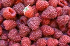 Raspberries royalty free stock images
