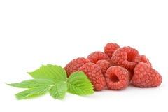 Raspberries. Fresh raspberries on white background royalty free stock photos