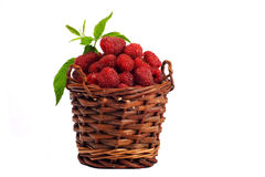 Free Raspberries Royalty Free Stock Photography - 1088967