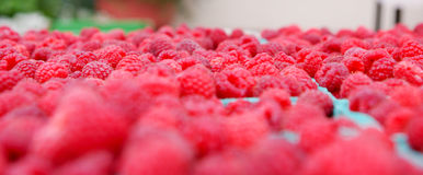 Raspberries royalty free stock image