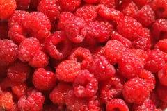Raspberries. Close-up of Raspberries Stock Photography