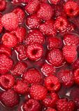 The Raspberries Royalty Free Stock Images