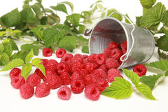 Raspberries. With leaves falling out of a bucket stock photos
