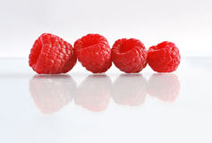 Raspberries. Four raspberries arranged in line on white with reflection Royalty Free Stock Photo