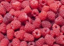 Raspberries. Sweet fresh raspberries closeup (background Stock Photos