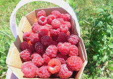 Raspberries. A lot of raspberries in a basket Royalty Free Stock Photo