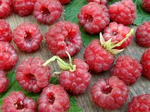 Raspberries. Some fresh picked delicious raspberries Stock Image