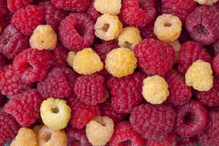 Raspberries_2 Fotografia Royalty Free