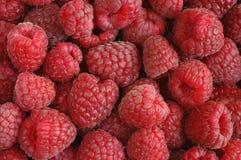Free Raspberries Stock Photos - 4610313