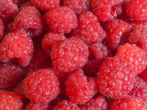 raspberries fotos de stock royalty free