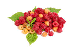 Raspberries. Heap of red and yellow raspberries with green leaves on white background stock photos