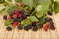 raspberries imagem de stock