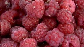 Raspberries stock footage