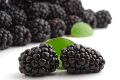 Raspberries. Blackberries very close with some more in background Royalty Free Stock Photos