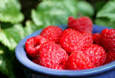 raspberries foto de stock royalty free