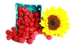 Free Raspberries And Sunflower Royalty Free Stock Photos - 2847238