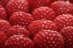 Raspberries backbround - close-up Stock Image