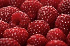 Raspberries backbround - close-up Stock Photo