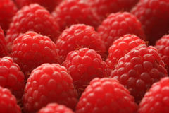 Raspberries Background Stock Photos