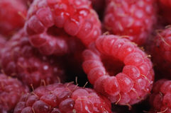 Raspberries background. Fresh raspberries background. Shallow depth of field. Focus on right raspberry Royalty Free Stock Photo
