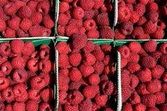 Raspberries background. Baskets of fresh ripe raspberries Stock Images
